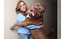 Wielki psy, które nadal myślą, że są małe - 13 Największych i najsłodszych psów
