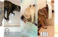 Mistrzowskie zagrywki zwierzaków, które nie lubią się kąpać. Znacie to?