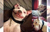 Ten pies, odkąd znalazł dom nie może przestać się uśmiechać! Został główną gwiazdą Instagrama i pokochały go tysiące osób!