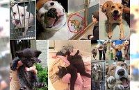 Ludzie odmienili ich los! Zobacz, jak zmieniły się zwierzaki, którym podarowano dom! JESTEŚMY WZRUSZENI!