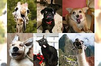 Zwierzęta też mogą być NIEFOTOGENICZNE! 25 mega zabawnych zdjęć, obok których nie przejdziesz obojętnie!