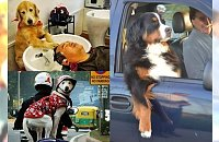Komedia! Te psy zachowują się jak ludzie. Zdjęcie nr 7 rozkłada na łopatki
