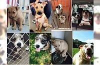 Schronisko vs. dom. Zobacz, jak zmieniły się zwierzaki, które znalazły kochających właścicieli... AŻ ŁZY CISNĄ SIĘ DO OCZU!