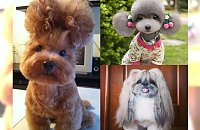 Fryzury tych psów są naprawdę wyczesane! Padniecie ze śmiechu