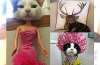 Nic nie poprawia humoru tak jak zabawne zdjęcia kotów. #9 najlepsze!