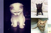 Angry cats - 20 kotów, których można się poważnie przestraszyć!