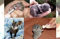 Słodkie zdjęcia malutkich zwierzaków tuż po narodzinach, które stopią nawet najzimniejsze serce! Zdjęcie numer 7 jest NIESAMOWITE!