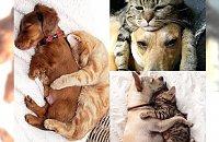 Galeria zdjęć, która jest dowodem na to, że psy i koty potrafią żyć w zgodzie - UROCZE