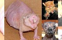 Najbrzydsze, najbardziej szpetne zwierzaki świata! Śmieszą czy raczej przerażają? Niesamowite dziwadła!
