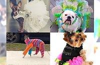 Ubrane psy, których właścicieli poniosła fantazja... Czy to jest normalne?