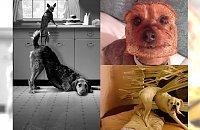 Masz zły dzień?? Musisz zobaczyć galerię najzabawniejszych psów z sieci - rozbawiły nas do łez!