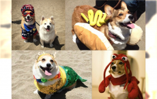 Najsłodsze psy świata - Corgi przebierają się w urocze kostiumy. Zobacz najcudniejsze zdjęcia z Internetu.