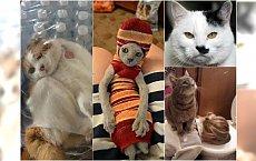 Te koty wygrały Internet! Najśmieszniejsze zdjęcia kotów, które stały się hitami sieci