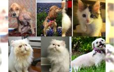 Zdjęcia przed i po adopcji zwierzaków, które wzruszą Was do łez!