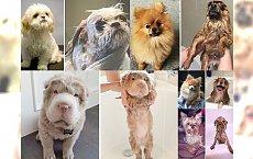 Zobaczcie, czemu zwierzaki nie lubią się kąpać! Mega zabawne metamorfozy, które doprowadzą Cię do łez! [AŻ 35 ZDJĘĆ!]