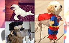 Zwierzęta w przebraniach - najzabawniejsze zdjęcia z sieci! PĘKNIECIE ZE ŚMIECHU - #14 the best!