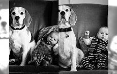NIESAMOWITE pomysły rodziców: robili zdjęcie swojemu dziecku z psem od urodzenia CO MIESIĄC! Efekty są niesamowite