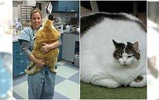 Najgrubsze koty, jakie widział internet... Czy one w ogóle przestają jeść?!