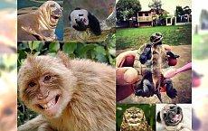 CO ZA CUDO! 30 uśmiechniętych zwierzaków, które pokochasz od pierwszego wejrzenia! ZARAŹLIWA GALERIA!