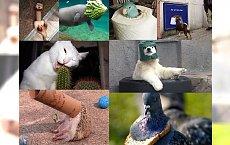 OMG! Aż 31 wpadek zaliczonych przez zwierzęta! Uśmiejesz się do łez! Zdjęcia nr 7 i 19 to nasi faworyci!