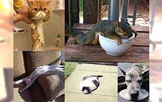15 zdjęć zwierząt, które poprawią Ci humor! Zakochasz się w tej galerii!