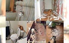Ten moment, kiedy zostawisz swoje zwierzaki same i później głęboko tego żałujesz... Zdjęcie nr 12 wygrywa!