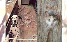 Co się może wydarzyć, kiedy zwierzak zostanie sam w domu? Zdjęcie nr 14 wyraża więcej niż tysiąc słów