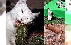 Zwierzęta też zaliczają wpadki - galeria, która bawi do łez!