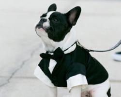 17 zdjęć, które udowadniają, że psy są idealnymi druhnami i drużbami