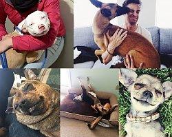 NIEZWYKŁA GALERIA! Te psy zostały sfotografowane pierwszego dnia po wzięciu ich ze schroniska czy ulicy. Musisz to zobaczyć!!!