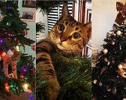 Galeria kotów na choinkach to najsłodsze, co dziś zobaczycie! Wesołych Świąt