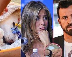 Justin Theroux z Jennifer Aniston pożegnali ukochanego psa. Poruszające zdjęcia. Byli małżonkowie trzymali się za ręce