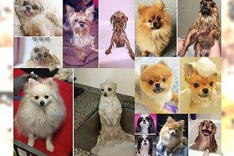 Śmiechu warte! Zobacz, dlaczego zwierzaki nie lubią się kąpać! My już się wcale im nie dziwimy!