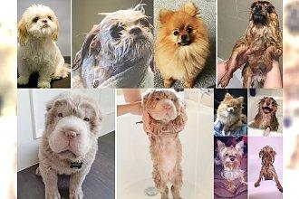 Chyba już wiemy, dlaczego psy nienawidzą kąpieli! Zobacz, jak po niej wyglądają, a uśmiejesz się do łez! [MEGA ZABAWNE METAMORFOZY!]