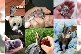14 baby animals, które stopią nawet najzimniejsze serce! Zdjęcie numer 7 jest NIESAMOWITE!
