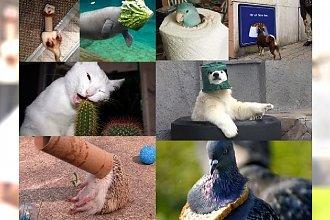 HAHA, CO ZA GAGATKI! Odkryj 30 wpadek zaliczonych przez zwierzęta! Uśmiejesz się do łez!