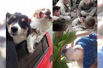 11 zdjęć ze zwierzakami w roli głównej. Każda z tych fotek sprawi, że się szeroko uśmiechniesz! CU-DOW-NE!