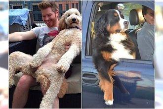 Te psy zachowują się jak ludzie! Hahaha, musicie to zobaczyć
