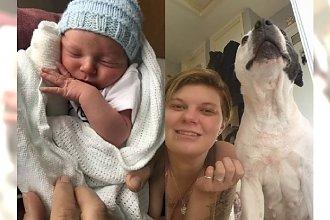 """Tata niemowlęcia walczącego o życie po pogryzieniu przez psy, powiedział o czworonogach, że """"też są jego dziećmi""""..."""