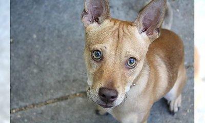 Dzień Kundelka – celebryci pomagają psom