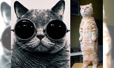 Koty rządzą Internetem! Zobacz najlepsze zdjęcia!