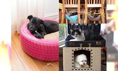 WOW! Kreatywne legowiska dla psów i kotów, które można zrobić samemu