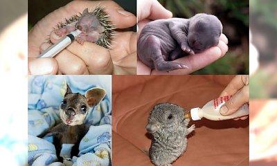 15 zwierzęcych maluchów, które pokochacie! Zdjęcie numer 7 jest NIESAMOWITE!