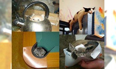 18 miejsc, w których znajdziecie swoje koty - spróbujcie się nie śmiać!