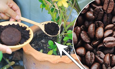7 pomysłowych sposobów wykorzystania fusów z kawy w domu. Po co wsypuje się ją do butów?!