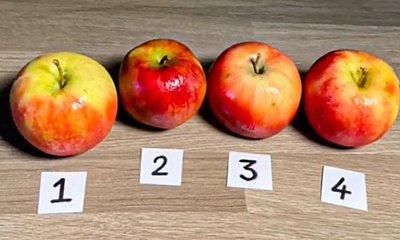 Które jabłko jest ciastkiem? Niewiele osób zna poprawną odpowiedź!