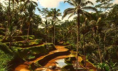 """Bali otwiera się na turystów! Czym będą """"zielone strefy""""?"""