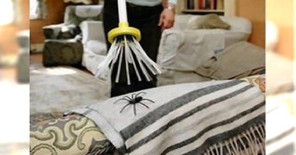 Sposób na pająka