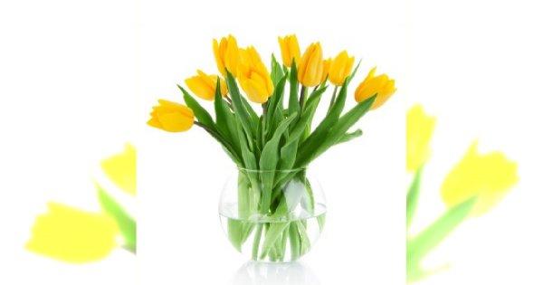 Kwiaty cięte ozdobą wnętrza