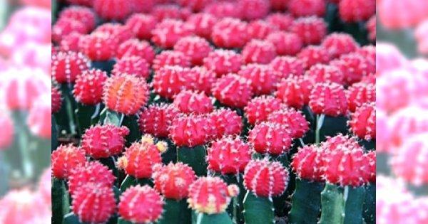 Kwiaty dla zapracowanych: piękne i wygodne